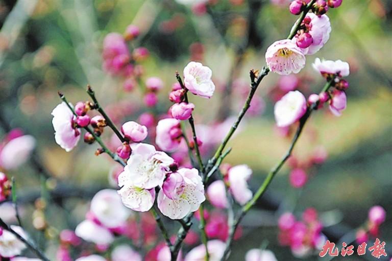 2016新春庙会将有各种古风主题的七彩花灯,各种庙会传统民俗项目以及
