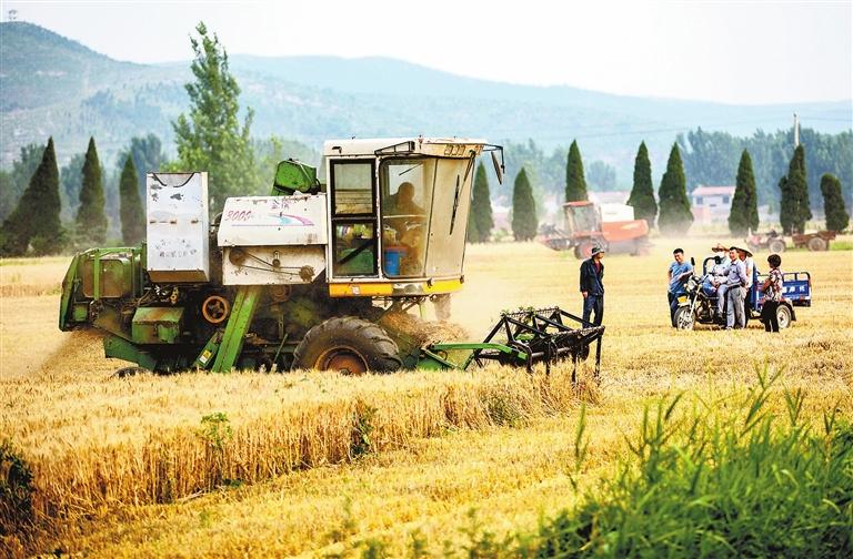 6月3日,安徽省淮北市石台镇农民在收获小麦.(新华社发王文摄)